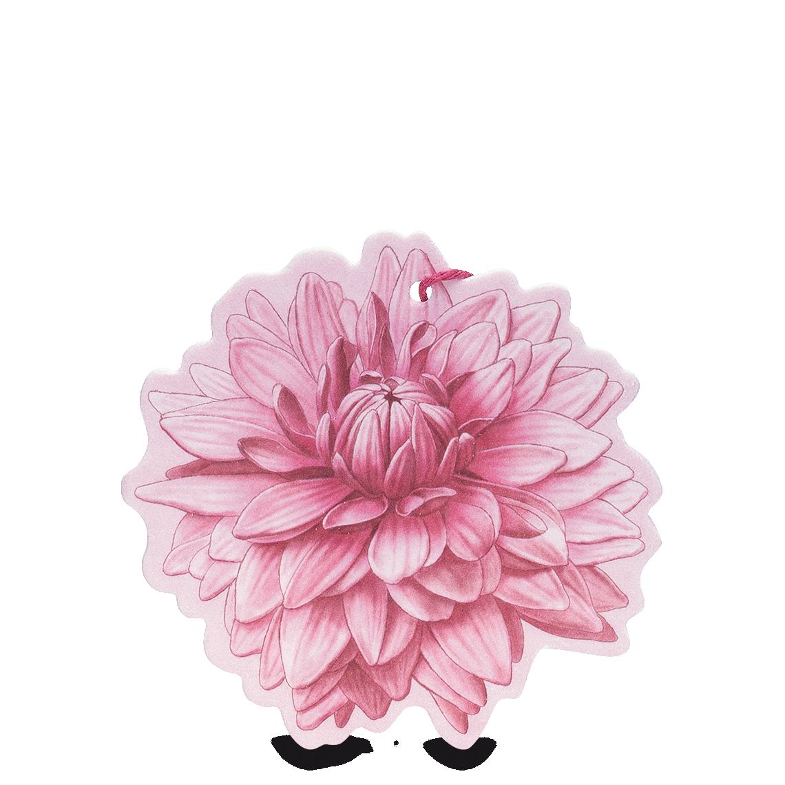 Fiore profumato Sfumature di Dalia